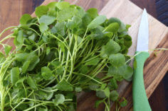 CDC Names Watercress Healthiest Vegetable